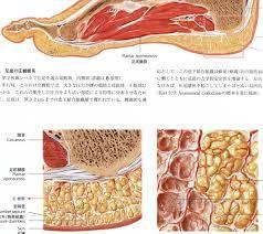 足の解剖図 拡大版